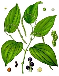 Black Pepper Essential Oil (EO36)
