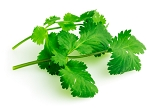 Cilantro Essential Oil (EO40)