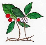 Wintergreen Essential Oil (EO63)