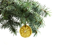 Douglas Fir and Lemon Essential Oil Blend (EO97)