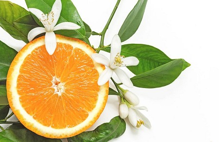 Citrus Blossom Essential Oil Blend (EO99)