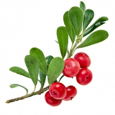 Uva Ursi extract (raw material to be added to skincare products)
